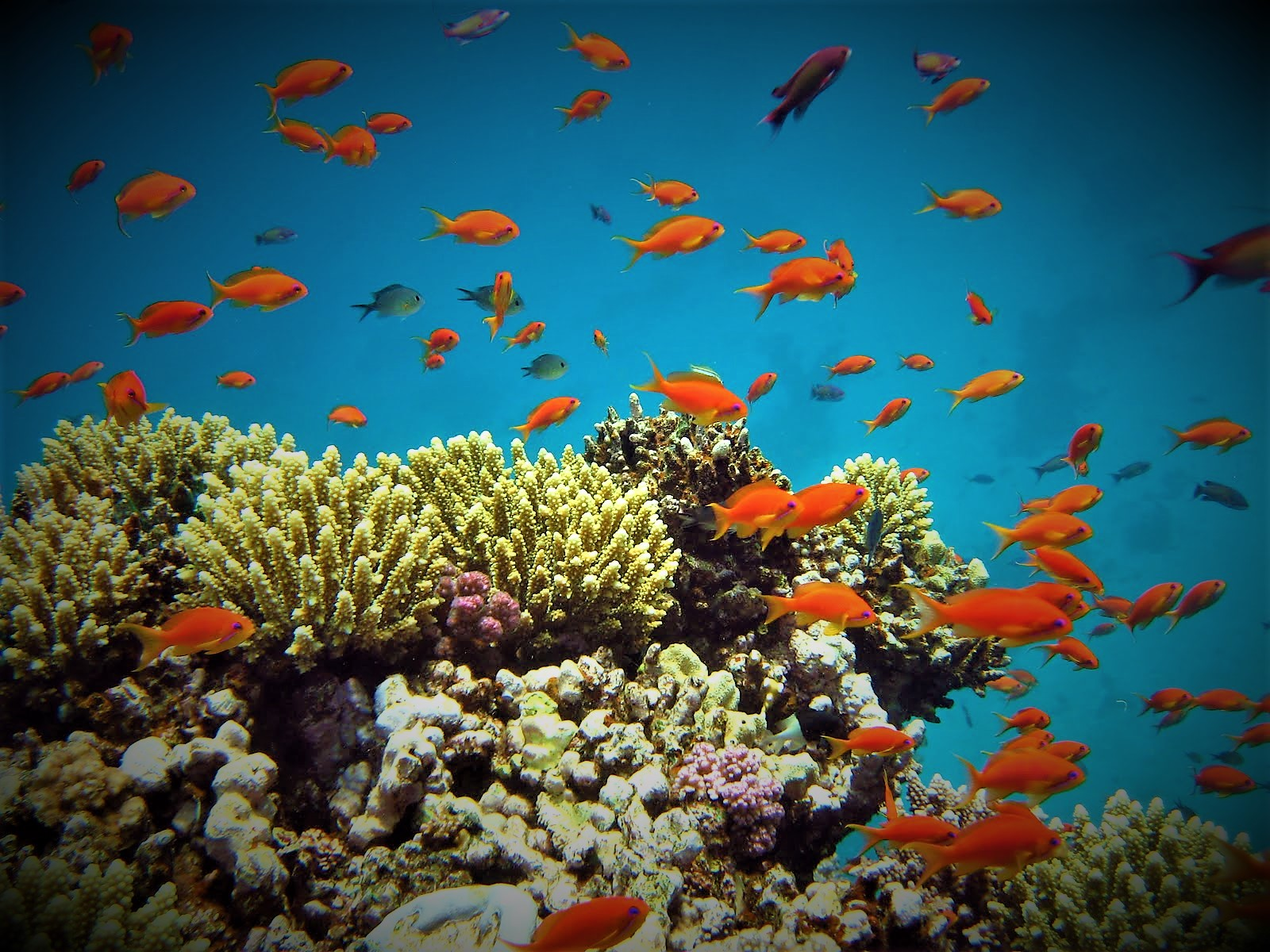 10 Diving Package, 5 Days + Meals On The Boat (Egipt)